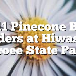 2/11 Pinecone Bird Feeders at Hiwassee Ocoee State Park